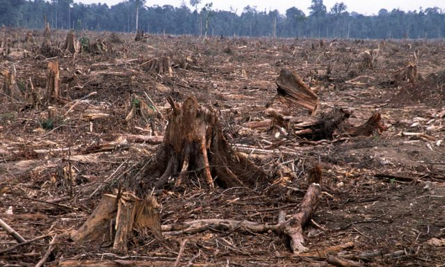 deforestation-
