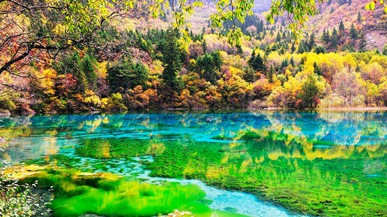 The scenery of the Wuhuahai of the Jiuzhaigou scenic area. (Photo from the official website of the Jiuzhaigou scenic area)