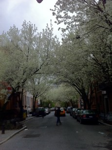 W. 11st in the Spring