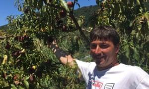 Emilio Queirolo picking peaches