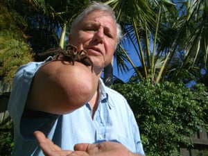 Attenborough with a bird-eating spider in 2005 during an episode of Life In the Undergrowth.
