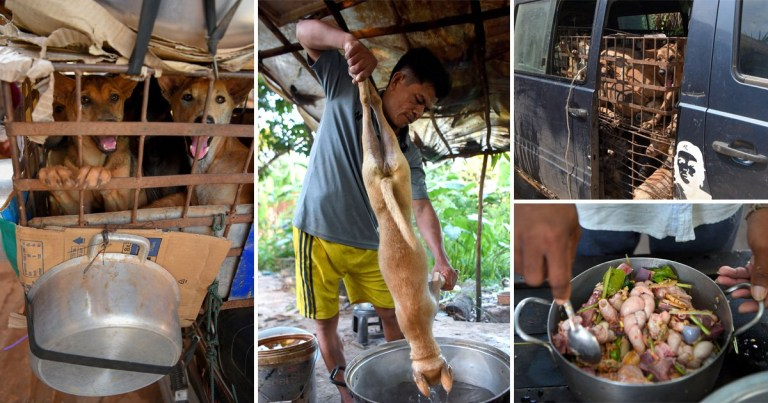 Pictures of dogs being held captive and prepared as meat in Cambodia's dog meat trade