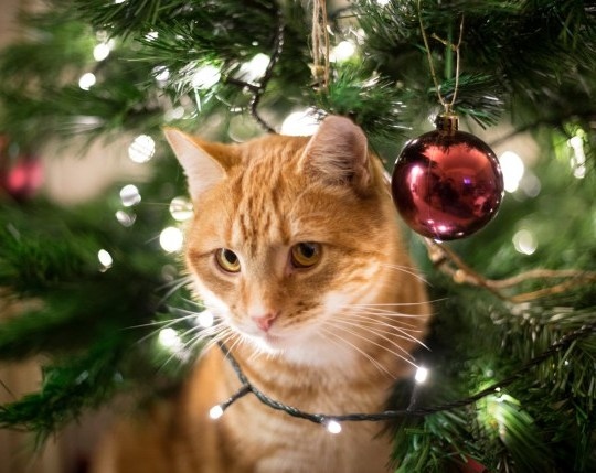 A cat in a Christmas tree