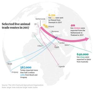 Graphic live animal export