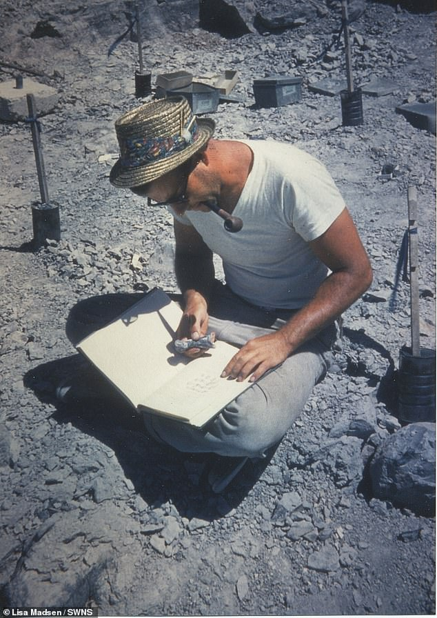 Professor Madsen Jr maps Allosaurus bones at the Cleveland-Lloyd Dinosaur Quarry in Utah