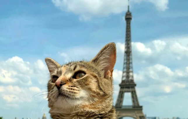 Quita the cat in Paris