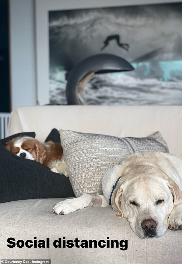 Ideal: Courtney Cox posted frequently about her social distancing antics, including a snapshot of her sleeping dogs