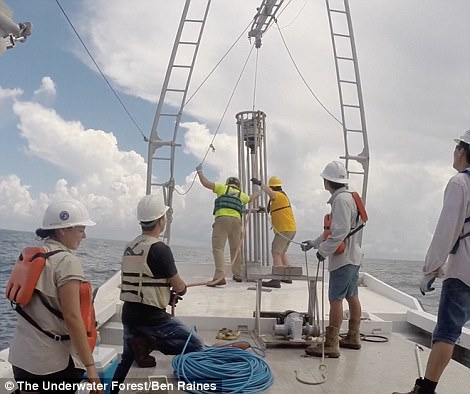 The underwater forest likely lay undisturbed until 2004, the experts explain, when the powerful category 4 storm Hurricane Ivan swept through the region, bringing 140 mile per hour winds and 98-foot-tall waves