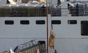 A port bull is craned on to a vessel. for export