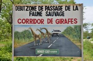 A sign warning of a giraffe corridor near the Bénoué national park, Cameroon.