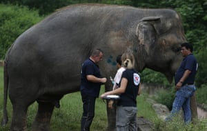 Kaavan getting the health check that enables him to leave Marghazar zoo.