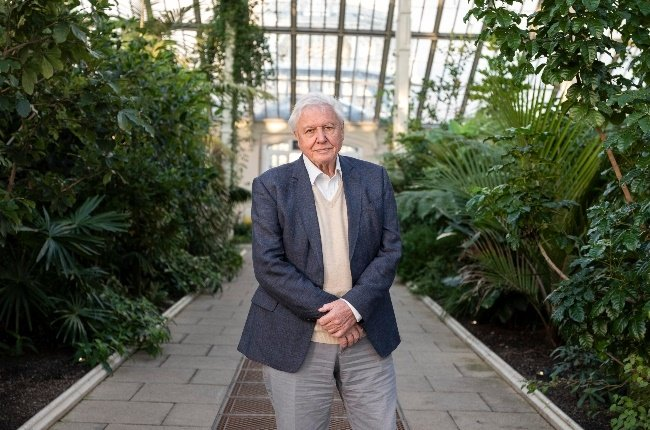 David Attenborough is in the extraordinary position of having seen more of the natural world than probably anyone else. (Photo: CAMERA PRESS/GREATSTOCK)