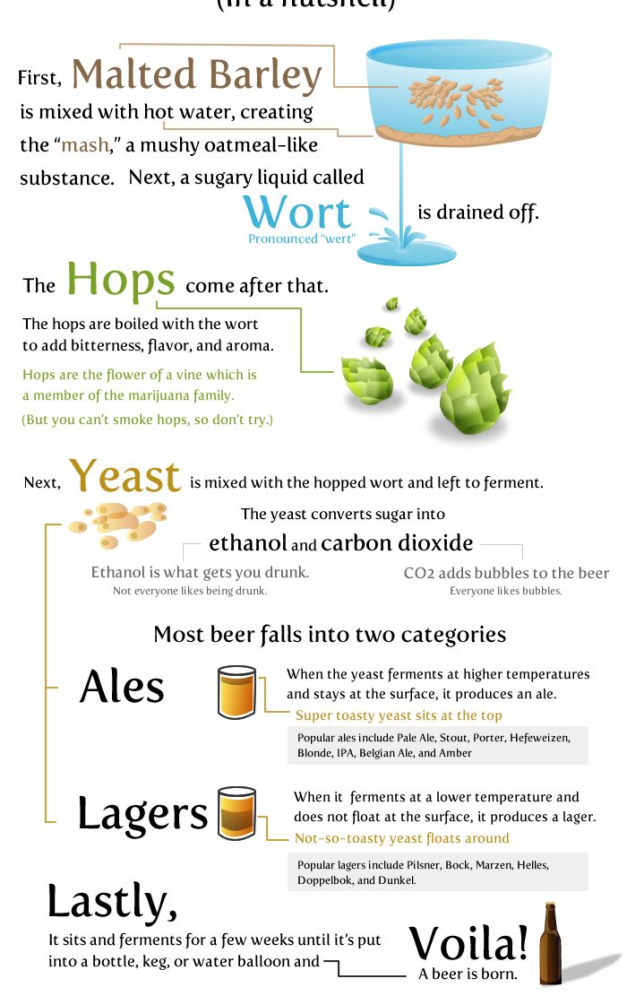 20 Things worth knowing about Beer Infographics 5