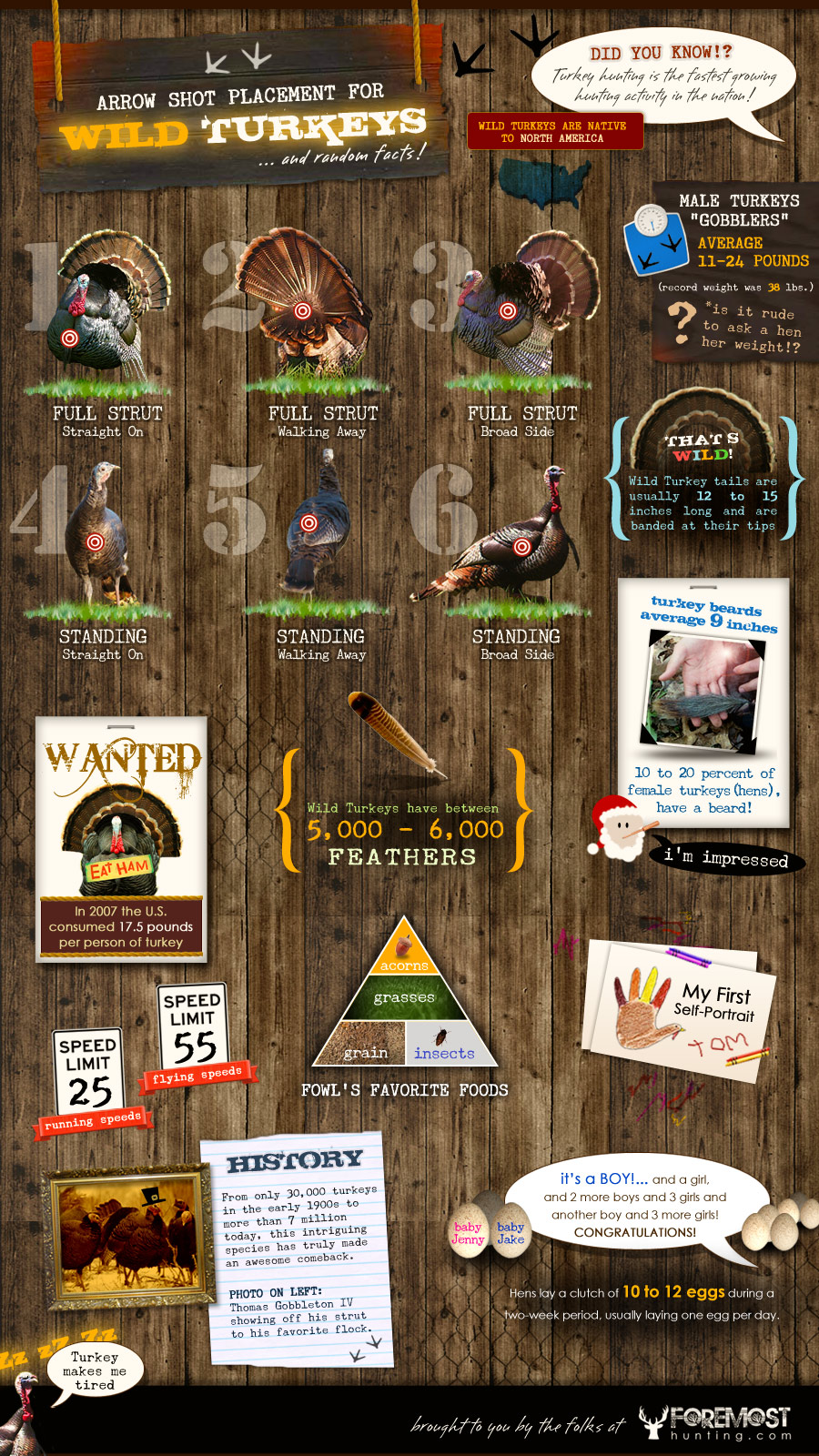 Wild Turkeys Infographic
