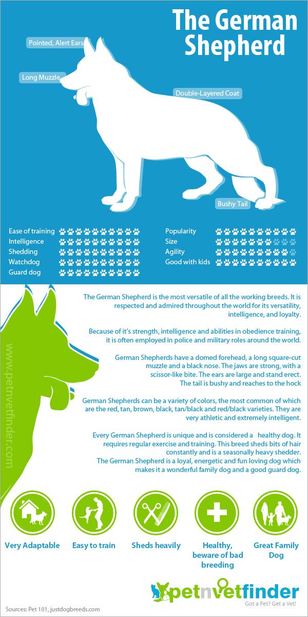 German Shepherd Infographic