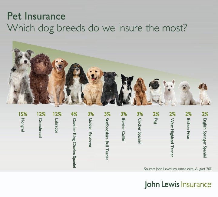 Which dog breeds do we insure the most?