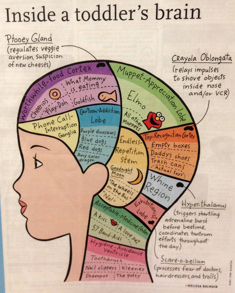 Inside a Toddler's Brain