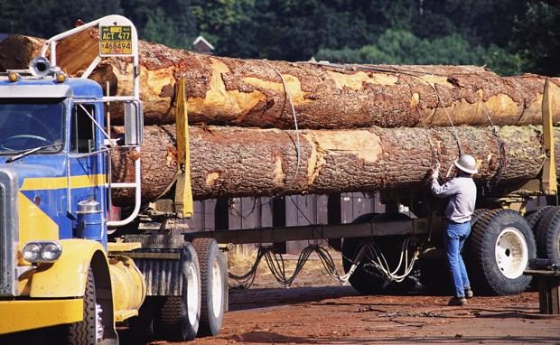 logging-industry
