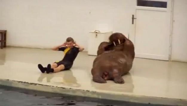 Κάνονας γυμναστική με έναν θαλάσσιο ελέφαντα ...και τα καλύτερα βίντεο της Παρασκευής