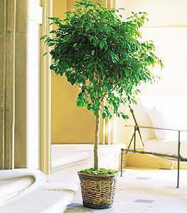 Αυτά τα φυτά φιλτράρουν καλά τον αέρα μέσα στο (κλειστό λόγω κρύου!) σπίτι