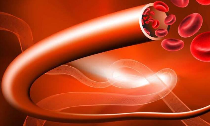 Δημιούργησαν τεχνητά αιμοφόρα αγγεία – Τι αλλάζει στις μεταμοσχεύσεις