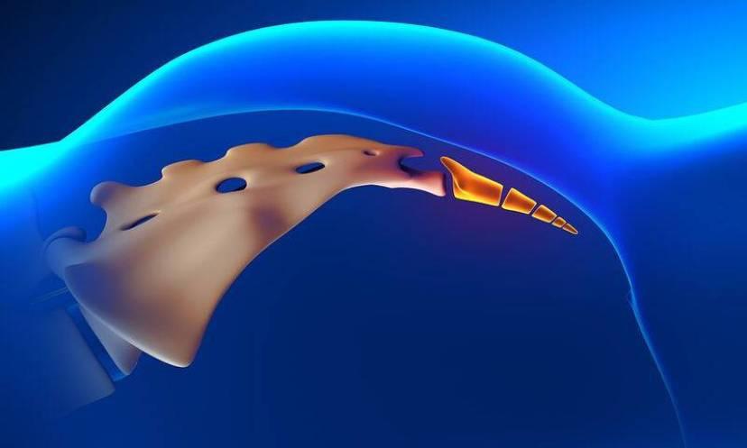bigstock-Coccyx-Bone-Anatomy-82169591