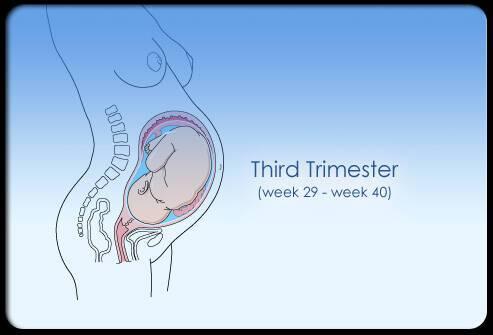 Τα στάδια της εγκυμοσύνης μέσα από φωτογραφίες