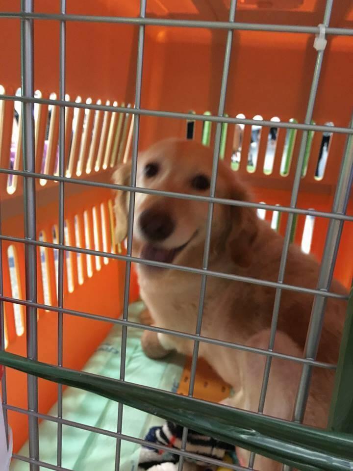 Έχασε τα πόδια του στη φρικτή «Βιομηχανία Κρέατος Σκύλου», η ζωή όμως του έδωσε μια δεύτερη ευκαιρία.