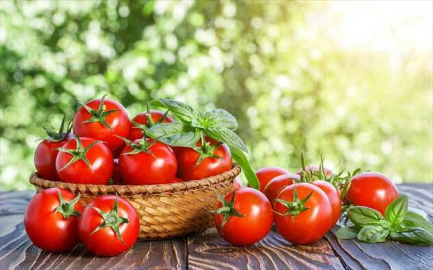 Όλα όσα πρέπει να ξέρουμε για την ντομάτα