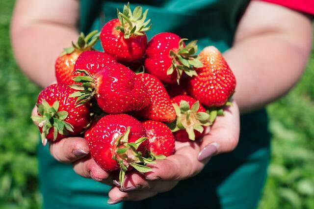 Πρόληψη του Αλτσχάιμερ με τη δύναμη της φράουλας!