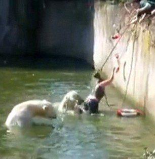 SHOCKING moment polar bear attacks woman who climbed