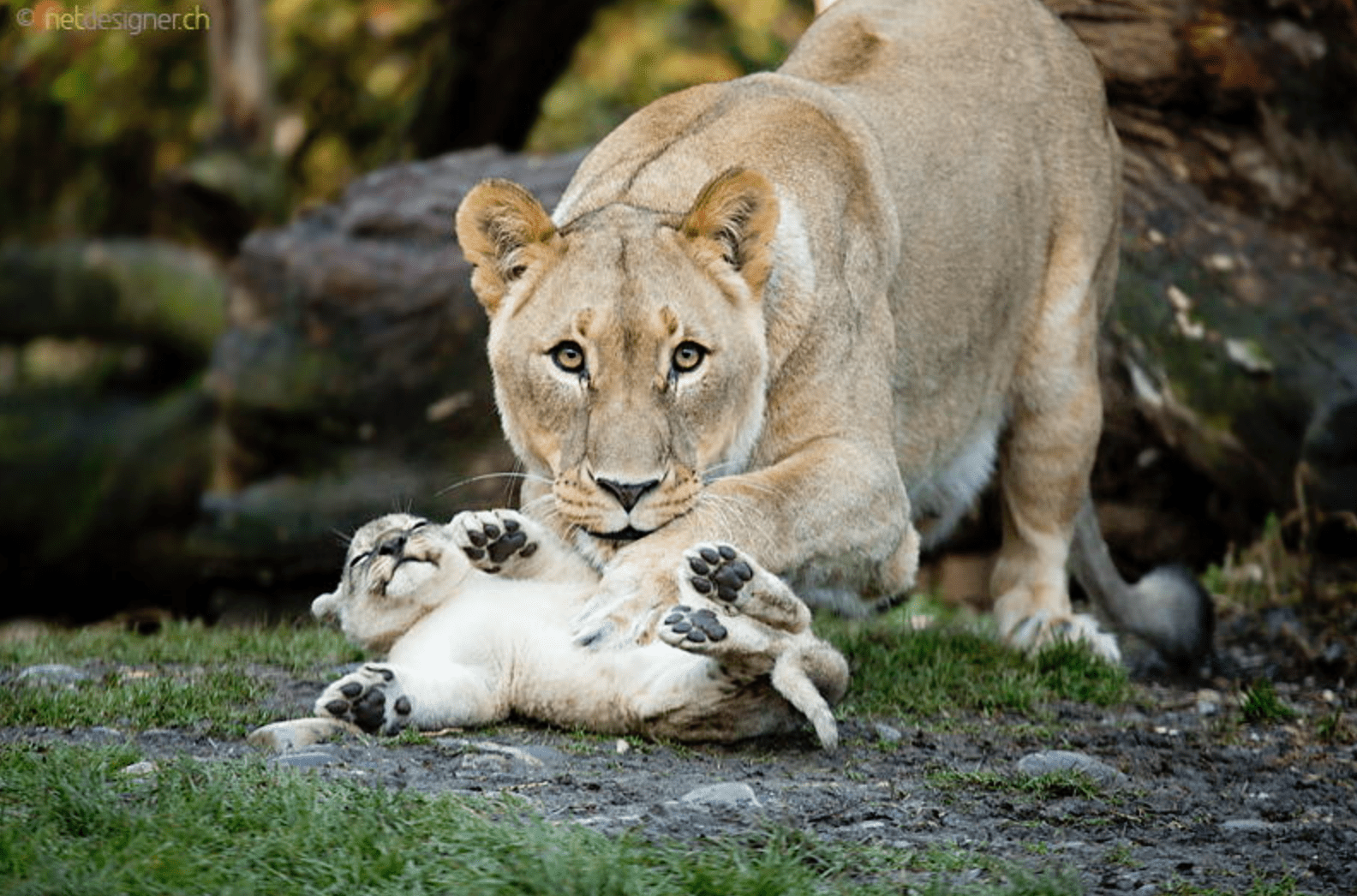 These 25 Amazing Photos Of Animals With Their Parents Will
