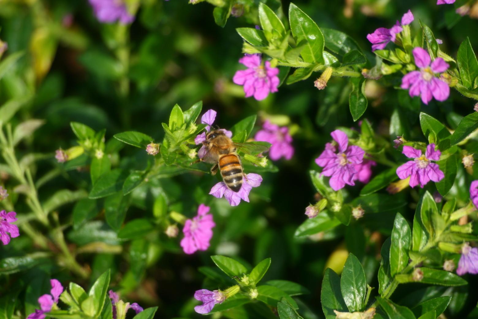 讓蜜蜂還有瓢蟲蜘蛛們回來!種綠籬與野花營造田邊棲地 | 上下游News&Market