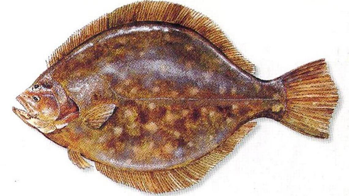 The dark side to North Carolinas fishing heritage  News