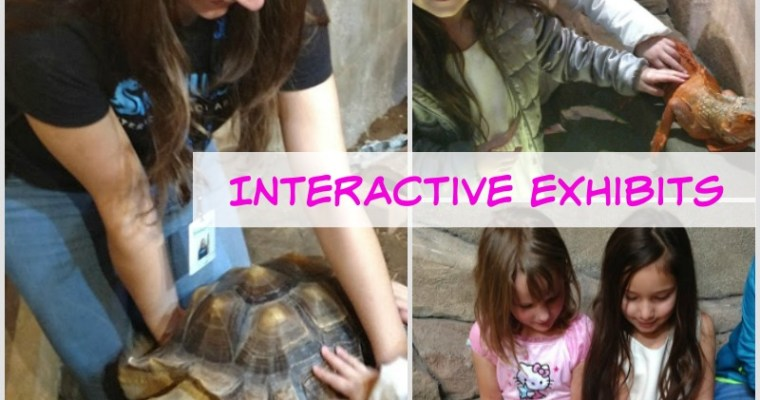 What We Think: Our First Visit to Seaquest Interactive Aquarium