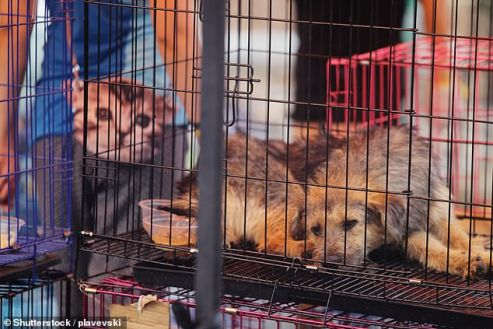 Covid-19:Chinese City With 13m Population Pass Law Banning Eating Of Dogs, Cats, Others