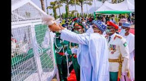 Presidency Reacts To Report On Pigeons That Refused To Fly On Armed Forces Remebrance Day