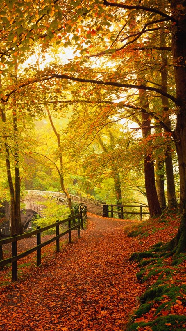 Autumn Falling Leaves Wallpaper 28 Breath Taking And Most Beautiful Fall Wallpaper For