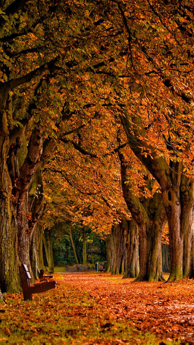 Tree With Leaves Falling Wallpaper 28 Breath Taking And Most Beautiful Fall Wallpaper For