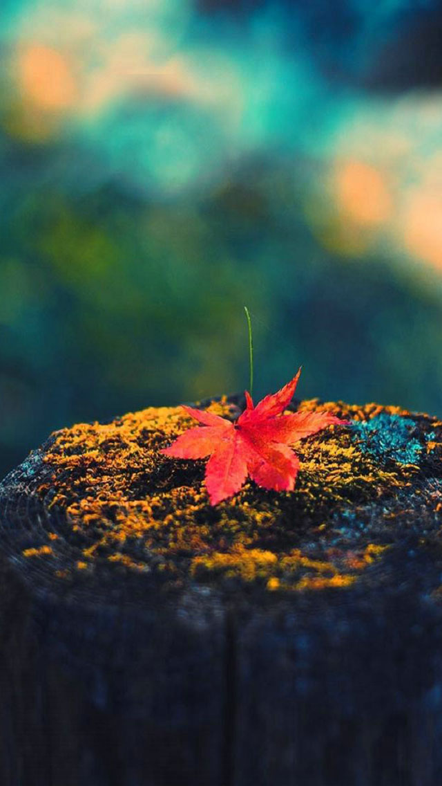 Autumn Wallpapers For Iphone Djiwallpaper Co