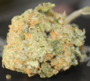 Girl Scout Cookies Strain-Top-Weed-Strains