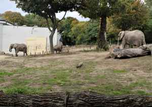 Warsaw Zoo's three African elephants will be given a cannabis extract to relieve their stress.