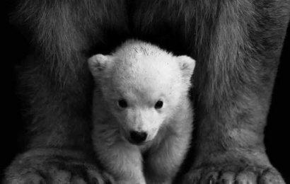 Hayvanların %83'ünü Yok Ettik!