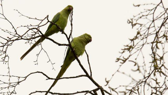 Anıtkabir'in Sıra Dışı Ziyaretçileri Papağanlar…