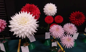 Attention-grabbing display of dahlias at Hamilton show