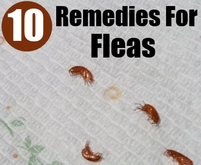 Flea Remedies