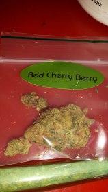 Red Cherry Berry du Barney's