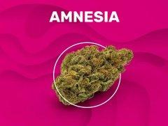 amnesia-weedzy
