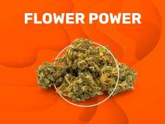 flowerpower-weedzy