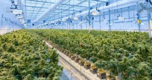 LaFleur cannabis en France